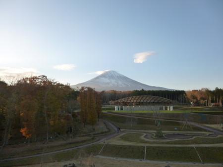 樹空の森から富士山を望む2