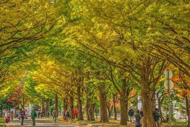 北海道大学の紅葉