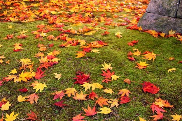 落葉のアート