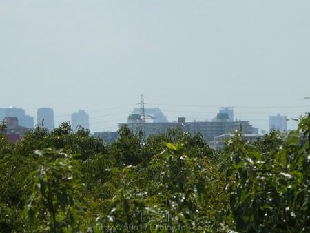 140830-万博記念公園 (25)