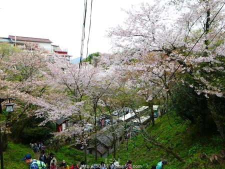 160410-吉野山 (12)