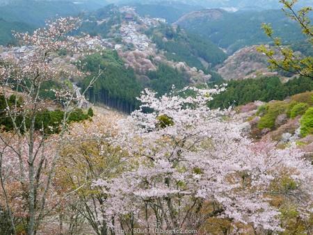 160410-吉野山 (18)