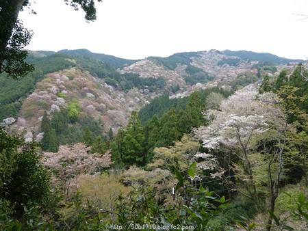 160410-吉野山 (68)