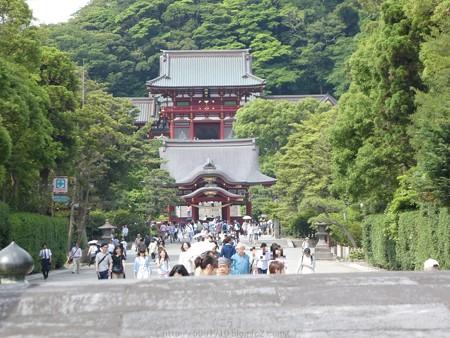 160606-鶴岡八幡宮 (6)