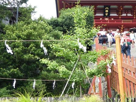 160606-鶴岡八幡宮 (14)