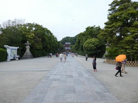 160606-鶴岡八幡宮 (34)