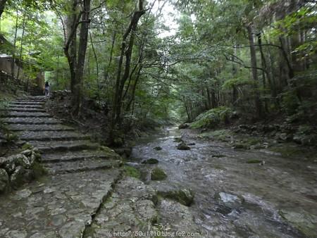 161017-瀧原宮 (62)