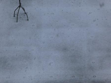 161124-雪 (6)