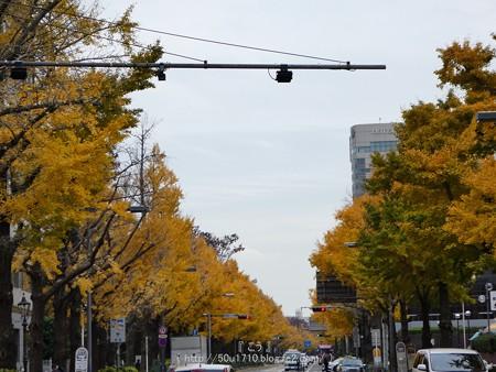 161130-山下公園通り黄葉 (14)
