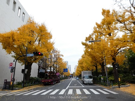 161130-山下公園通り黄葉 (24)