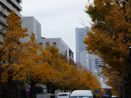 161130-山下公園通り黄葉 (26)