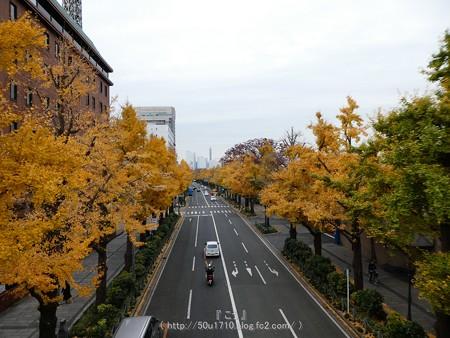 161130-山下公園通り黄葉 (48)