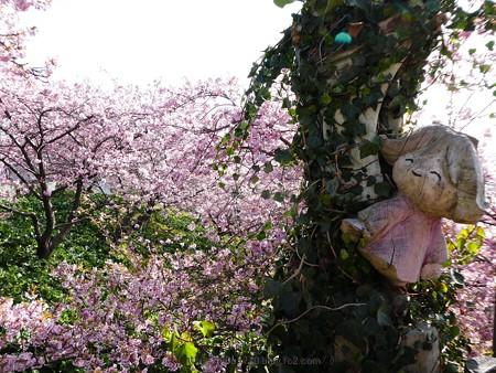 170228-松田町 河津桜 展望台 (9)