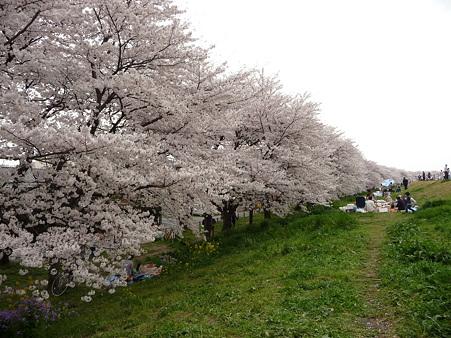 100411-熊谷桜堤 (31)
