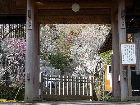 110225-東慶寺  (6)