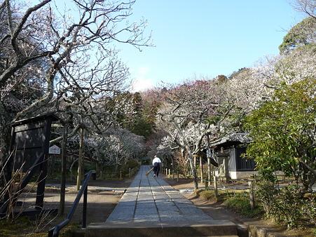 110225-東慶寺  (7)