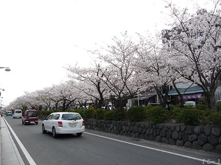 110411-鎌倉 段葛 (23)