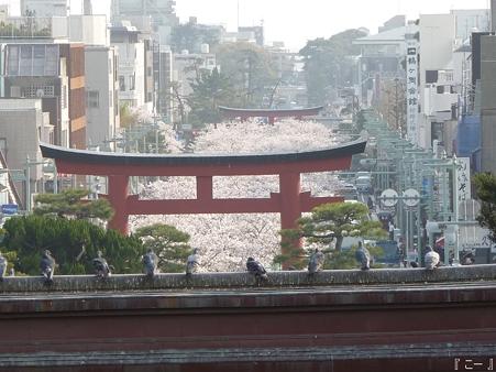 110411-八幡さま (11)