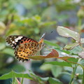 Photos: 羽の動きを確認中