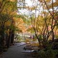 Photos: 一竹美術館紅葉