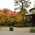写真: 松籟閣の紅葉