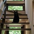階段の黒猫@鎌倉ねこの間