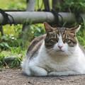 Photos: 貫録ある猫