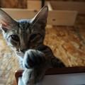 子猫パンチ@てしま旅館