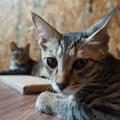 振り向く猫@てしま旅館
