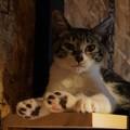 子猫の肉球@てしま旅館