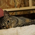 流し目猫@てしま旅館