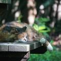 写真: ベンチでくつろぐ猫