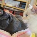 写真: これでも親子猫(右がお母さん、左が息子)