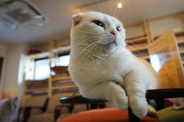 写真: けだるげな猫