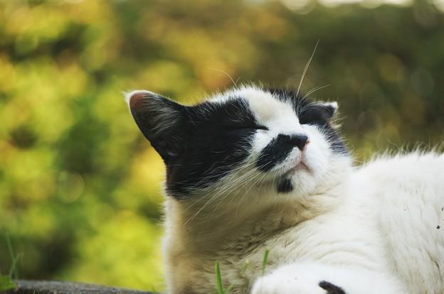 写真: 満足げな猫