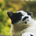 Photos: 満足げな猫
