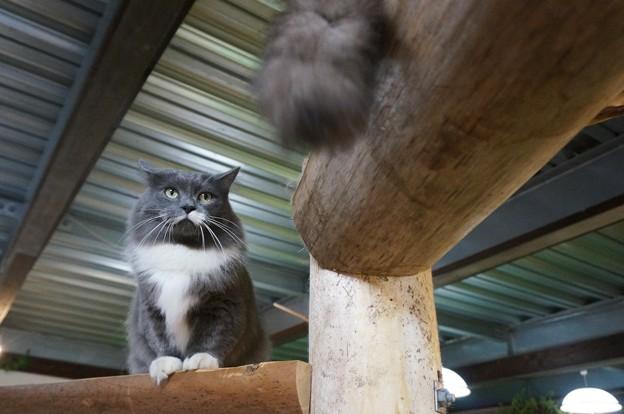 Photos: 堂々とした猫