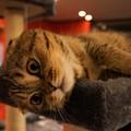 写真: パッチリ目の猫@ねこぱんち