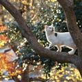 写真: 木登り猫1