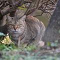 Photos: 猫の視線