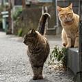 写真: 裏通りの猫達