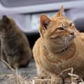 写真: 駐車場の猫たち