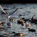 水鳥達の集会