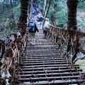 写真: 祖谷のかずら橋_3