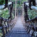 写真: 祖谷のかずら橋_5