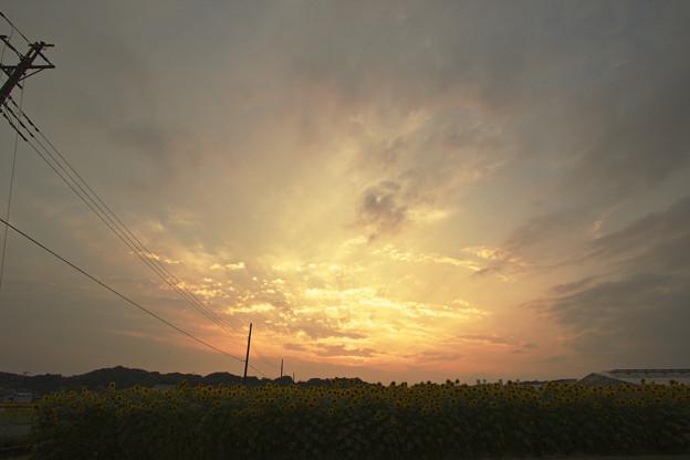 Photos: すごい夕焼けとひまわり