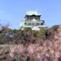 大阪城梅林25