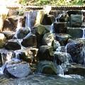 Photos: 玉川上水、蘇る水