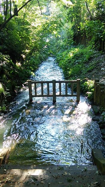 Photos: 玉川上水、冠水