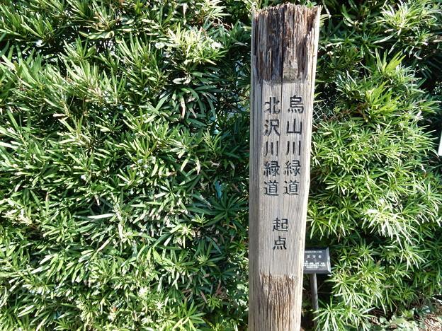 烏山川 北沢川 緑道起点